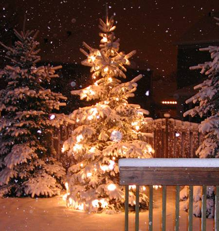 Christmas Tree Safety Tips Amp Boise Recycling Dates